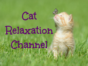 Cat Relaxation Channel